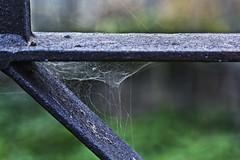 Interferro (Ignacio M. Jiménez) Tags: macromondays thespaceinbetween ignaciomjiménez telaraña hierro iron metal spiderweb 7dwf macro