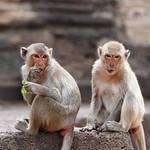 Monkeys in Lopburi thumbnail