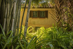 Through the trees (Tim Ravenscroft) Tags: trees bamboo palm foliage house pinewood bokgardens florida usa