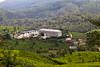 IMG_2452 - Tea Factory (Stuart Butler / Oceansurf) Tags: tourism asia tea srilanka hillcountry teaestate tealeaf nuwaraeliya teapicker feb2014