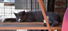 Leone (.Vale.) Tags: cats baby animals cat kitten feline kitty kittens gatto gatti rifugio micio micia gattino gatta catshelter gattini micini