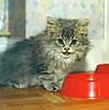 00380 (d_fust) Tags: cat kitten gato katze 猫 macska gatto fust kedi 貓 anak katt gatito kissa kätzchen gattino kucing 小貓 고양이 katje кот γάτα γατάκι แมว yavrusu 仔猫 का बिल्ली बच्चा