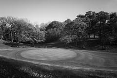 Pin High (mfhiatt) Tags: blackandwhite green golf waveland iowa desmoines day293 day293365 365the2015edition 3652015 dscf82531015jpg 20oct15