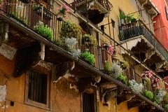 Piazza delle Erbe close-up, Verona (conrad_hanchett) Tags: italy nikon pottedplants verona ballustrade 2015 mazzanti piazzadelleerbe casamazzanti