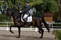 October CCVM Doma Clsica (Myprofe) Tags: madrid horse caballo equestrian dressage domaclsica clubdecampovillademadrid ccvm