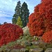 Awesome Acers