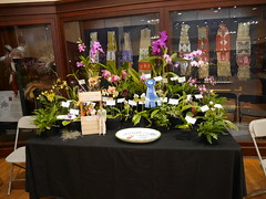 Ventura Orchid Society (cieneguitan) Tags: flora lan bunga orkid okid angrek anggerek