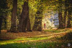 2015-11-08_Q8B4285  Sylvain Collet.jpg (sylvain.collet) Tags: autumn trees france leaves automne leaf arbres sur feuilles marne vairessurmarne vaires