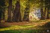 2015-11-08_Q8B4285 © Sylvain Collet.jpg (sylvain.collet) Tags: autumn trees france leaves automne leaf arbres sur feuilles marne vairessurmarne vaires