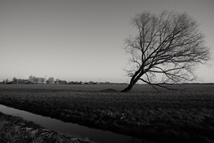 standout (timsve) Tags: blackandwhite white black tree nature beautiful landscape background backgroundnature