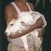 Calf born in gaushala, India