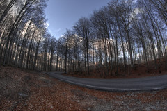 #163 (mariopolicorsi) Tags: mariopolicorsi maremma canon eos 700d fisheye december dicembre samyang 8mm inverno winter monteamiata monte alberi trees nuvole clouds bosco wood italia italy toscana tuscany europa europe travel photoshop photomatix hdr hdraward simplysuperb landscapes natura nature