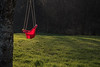 Untitled (Bon Espoir Photography) Tags: swing swingseat emptyswingseat redseat childseat tree red grass greengrass sunny treetrunk nikond750
