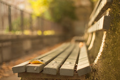 City benches and fences - HFF! (Nathalie Le Bris) Tags: bench bokeh city lfall autumn otoño banco ciudad hoja leaf fence newyork manhattan hudsonheights