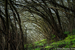 Caving in (JMurphyphotography) Tags: dark sunset green tree branches nature germany travel europe fullframe nikond610 nikon2470mmf28 2470 fx nikon d610 outside arch arches falling