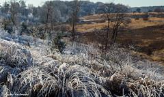 161230_007-12.jpg (Jacky Vastmans) Tags: limburg maasmechelen mechelseheide beriezen bevroren bos cold contrast freezing frozen koud landscape landschap panorama sneeuw sneeuwlandschap snow snowy stilleven vriezen winter winterlandschap wood