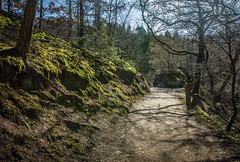 Blessing (thewhitewolf72) Tags: irishblessing segen weg eifel schatten sonne licht frühling wandern bäume wald zukunft wunsch 2017 jahr freunde