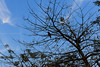 0W6A9334-2 (Liaqat Ali Vance) Tags: nature tree blue sky bird google lahore liaqat ali vance photography punjab pakistan