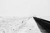 .[into] the wilderness. (Shirren Lim) Tags: mongolia white monochrome wilderness winter landscape road trip vast animal clouds sky desolate blackandwhite outdoor animals roadtrip mountains
