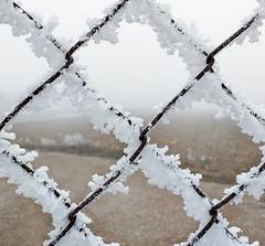 Dies de fred (ancoay) Tags: winter 7dwf fred frio invierno helado escarcha blanco white ancoay canon600d