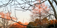 IMG_2334 (Clara I. Duvall) Tags: winter barebranches countryplace fallcolors
