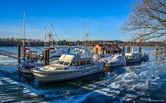 Kanaka - Landing (Haney) (SonjaPetersonPh♡tography) Tags: mapleridge fraservalley britishcolumbia canada 2017 winter fraserriver nikond5200 nikon kanakalanding kanakalandinghaney haney harbourauthorityofkanakacreek riverfront moorage dock wharf boats fishboats fishingboats boathouse boatsheds river landing frozenice harbour ice floatingice iceontheriver scenic