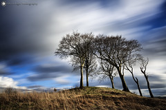 Seven Sisters round barrow, Copt Hill (Silent Eagle  Photography) Tags: sep silent eagle photography canon canoneos5dmarkiii silenteaglephotography sevensistersroundbarrow copthill sevensisters northeast longexposure lee leefilters trees silenteagle09 outdoor iso50