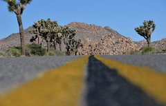 On the road to Joshua Tree (yonkis_at_34) Tags: •yonkis34 •nikon •nikond200 •favorite •objektif •enjoy •flickr popular photographer •fun •most beautiful pictures •travel •voyage •trip •amazing capture •photographe •landscapes picture •fabulous •nikond5300 •nature •landscape •land •terre •tanah •trees •arbres road sunny joshua tree land terre tanah trees arbres yonkis34 nikon nikond200 favorite objektif enjoy flickr fun most travel voyage trip amazing photographe landscapes fabulous nikond5300 nature landscape