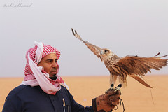 falcon (Turki al-Hamad) Tags: portrait people bird nature travel nikon adult man photo canon photos looking wildlife one photography kite outdoors veil competition wild daylight raptor headscarf sideview wear photographic falcons photographer falcon flowing
