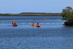 02. Kayaking at John Pennekamp (Misty Garrick) Tags: johnpennekamp johnpennekampreef johnpennekampcoralreefstatepark coralreef florida keylargofl keylargo floridakeys atlanticocean