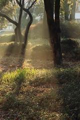 Morning Haze (seiji2012) Tags: もや 靄 朝日 シルエット haze mist morning sun ray silhouette 一橋大学 国立市 朝
