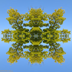 Tree Abstract (peterphotographic) Tags: uk blue england abstract tree london canon square britain paste symmetry multiple e17 walthamstow eastlondon g15 stoneydownpark ©peterhall img4725sqmultiedwm