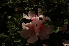 Light and shadows (Johnny Worldadventurer) Tags: light shadow flower floral garden texas arboretum mercer botanic humble