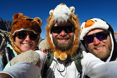 Bear, Lion and Penguin