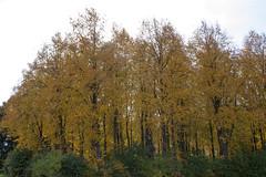 Floriade_251015_7 (Bellcaunion) Tags: park autumn fall nature zoetermeer rokkeveen florapark