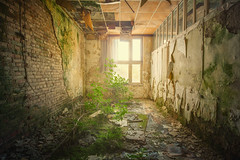 Indoor Plants (klickertrigger) Tags: plants sun history abandoned architecture moss ray decay urbanexploration dust mould lostplace stefandietze