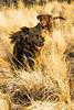(Kneale Quayle) Tags: dogs bc tess kelowna nov08