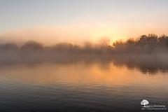 Les cygnes (photosenvrac) Tags: lumire paysage loire brume leverdesoleil fleuve thierryduchamp