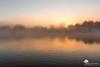 Les cygnes (photosenvrac) Tags: lumière paysage loire brume leverdesoleil fleuve thierryduchamp