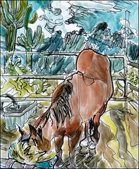 Elvis Buried in Hay (Kerry Niemann) Tags: apachejunction horsedrawing inkandwatercolordrawing
