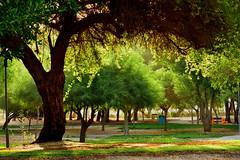 Fintas Garden (faisy5c) Tags: tree green beautiful garden landscape nikon kuwait fintas d7100 nikonafs70300mmvr 5ccha faisy5c nikond7100