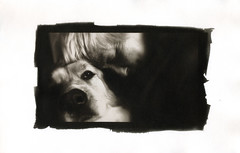 Suzanne & Amadou. Vandyke. (Dguyzé) Tags: vandyke ipad altprocess vandykebrown stonehengepaper blackandwhite bw vandykebrownprint altprinting dog chien altprint vandykeprint littledoglaughednoiret