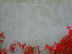 Ivy & Concrete (Wits End Photography) Tags: red plant building texture lines wall garden concrete outside midwest pattern exterior outdoor cement stlouis ivy vine structure minimal line trellis diagonal american missouri minimalism saintlouis simple textured