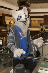 DSC_9846 (Acrufox) Tags: chicago illinois furry midwest december ohare rosemont convention hyatt regency 2014 fursuit furfest fursuiting acrufox mff2014