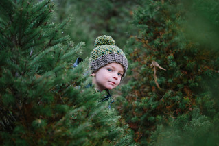 Picking the Perfect Tree