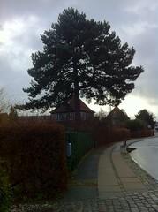 Gentofte - Lundeskovsvej (1921-24) (annindk) Tags: hellerup housing trees