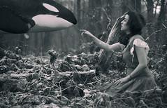 734 ('GHAZALEH GHAZANFARI') Tags: killer whale selfportrait surrealphotography