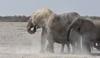 (Silvia Bertuzzi) Tags: dust africanwildlife wildlife etosha safari africa elefanti elephant elephants