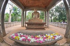 Samadhi Buddha Statue (CharithMania) Tags: samadhibuddhastatue srilanka anuradapura charithmania