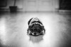 Hi (borishots) Tags: lenstagger pet pets dog smalldog eyes cute blackandwhite black animal friend bokeh bokehlicious bokehwhore sonya7 canonfd55mmf12ssc canonfd55mmf12 50mm f12 wideopen grain vignete cuteness bored smile lazy lazydog lazyness beauty beautiful portrait monochromatic monochrome blur light analog retro vintage film simulation puffy nose waiting sad sadness borishots sony canon natural naturallight softlight soft softness small oldfriend old olddog